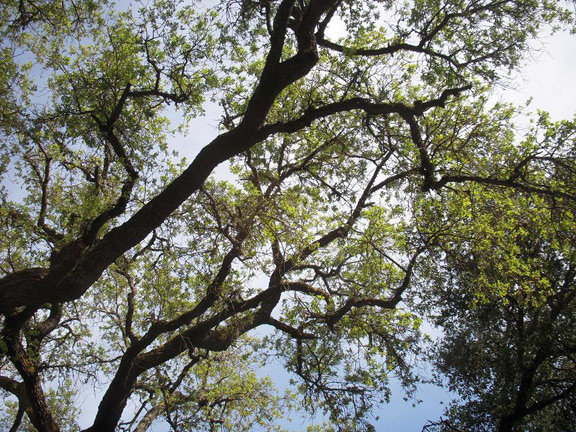 I just loved the canopy of this tree.
